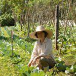 Agrotóxicos orgánicos